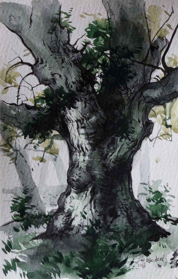Sakız Ağacı